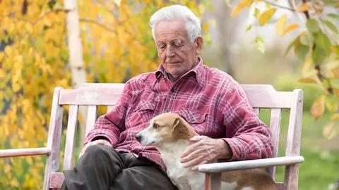 ДВА СТРАХА. Эту парочку я давно заприметил, проходя по весеннему парку. Старый, старый дедушка и его собака сидели на скамеечке и щурились на солнышко, щедро отдававшее им свои лучи. И не было