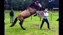 Doma Cavalo Xucro na Clínica PUCPR