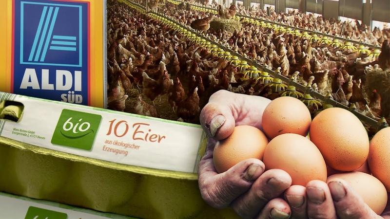 Bioeier von ALDI Süd Die Mär von glücklichen Hühnern