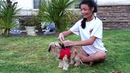 Small Dog Harness Vest Replaces Collars - Best Dog Harness Los Angeles