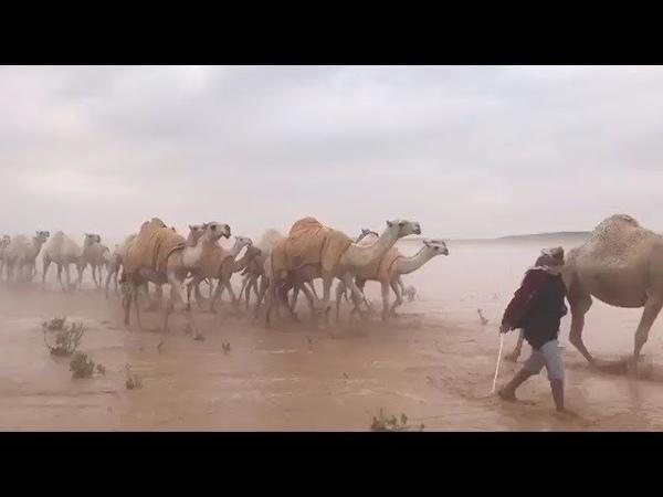 Саудовская Аравия: пустыня превратилась в море