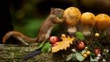Картинка животное. Листья, бревно, ягоды, белка, andre villeneuve, мох, яблоки, грибы, JPEG.