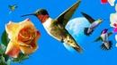 Как колибри пьют нектар и значение клювов в эволюции этих птиц