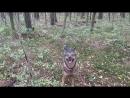 прогулочка Жо в октябрьском лесу