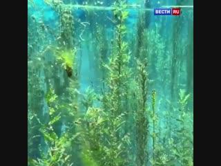 Сказочная красота подводного мира!
