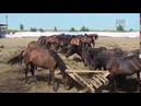 Спасение диких животных 3 серия