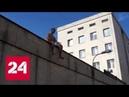 Павленского отпустили из французской тюрьмы, но обязали отмечаться - Россия 24