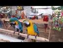 Ну очень смешные попугаи