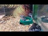 Прикол с хомяком funny hamster