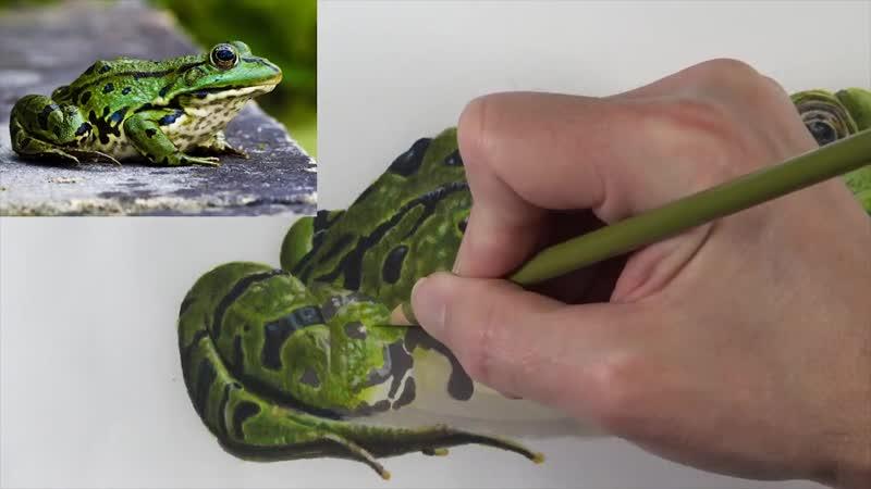Как рисовать маркерами и цветными карандашами. Лягушка