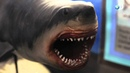 The Nightmarish Megalodon Sharkzilla -- Shark Week 2012
