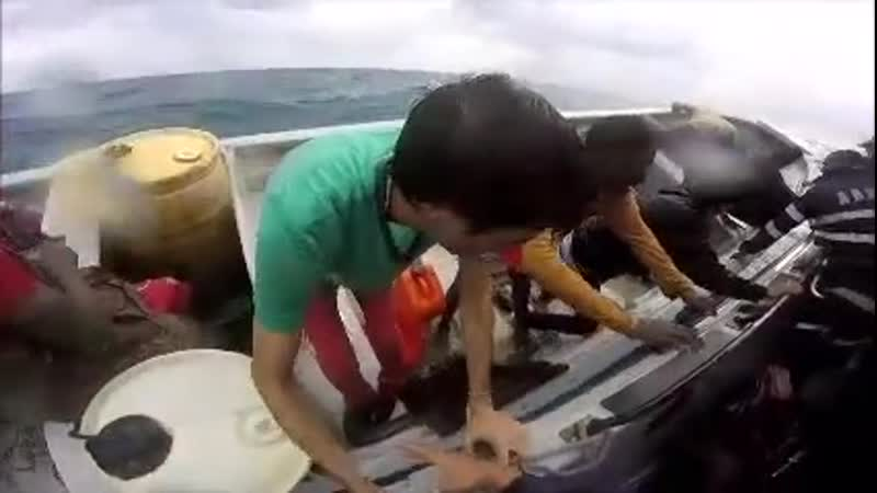 Rescate de inmigrantes latinos en alta mar