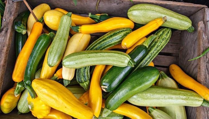 Когда сажать кабачок на рассаду Посадка, выращивание и уход в открытом грунте
