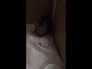 Кошечка с огромными глазищами ,1 месяц. Совсем еще дикая...страшно!