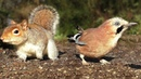 TV for Dogs - Squirrel and Bird Fun