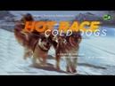 Hot Race Cold Dogs 2 100 km by dog sled across Kamchatka's wild tundra