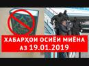 Хабарҳои Тоҷикистон ва Осиёи Марказӣ 19.01.2019 (اخبار تاجیکستان) (HD)