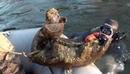Вести Ru Дайверы нашли 25 килограммовую кость мамонта на дне реки Тобол