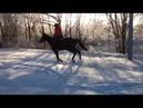 Подготовка молодой лошади кросс