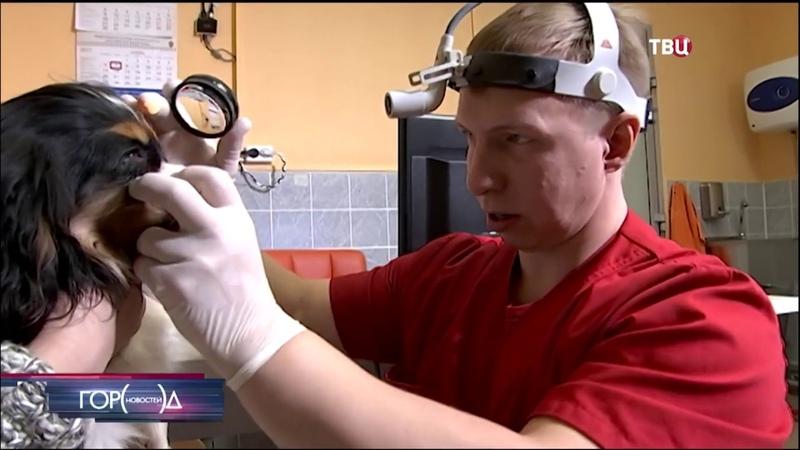 Лечение катаракты у собаки породы кавалер-кинг-чарльз-спаниель
