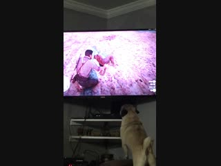My pug got pissed off that he wasn't getting the attention. Red Dead Redemption 2