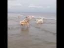 Кто-то очень любит купаться