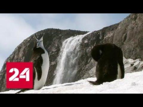 Русская Антарктида. XXI век. Фильм первый