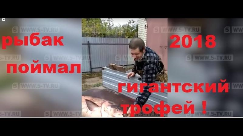 Житель Рязанской области поймал в Оке рыбу весом почти полцентнера — видео 2018