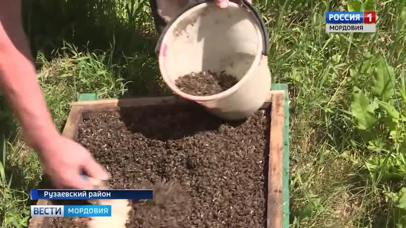 Массовая гибель пчёл в Рузаевке. Пострадали пасеки в Рузаевском районе