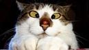 ПОПРОБУЙ НЕ ЗАСМЕЯТЬСЯ - Смешные Приколы с Животными до слез, смешные коты, funny cats 115