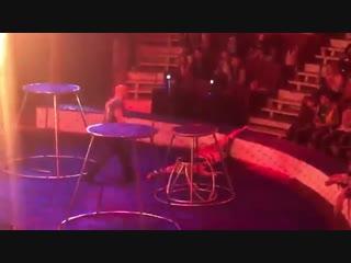 Тигр упал в обморок с судорогами на представлении труппы Багдасаровых в Магнитогорском цирке. Совсем загоняли котейку.
