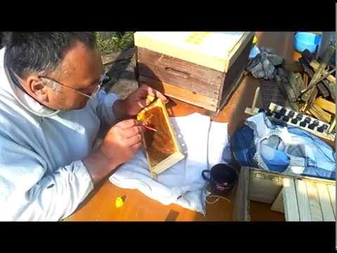 прививка в стартерный ящик из удья Удав