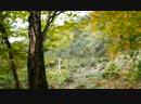 Осенний лес, Дракошка вышивает, вороны подпевают, древние боги с нами