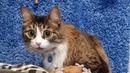 Мурмемуары. История кота Мурлока