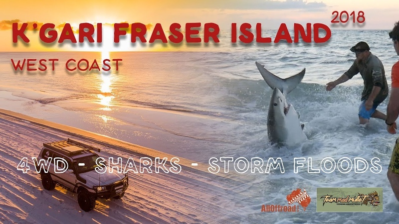 Fraser Island Kgari | Sand Driving to fishing for Great White Sharks| EP 1 | ALLOFFROAD157