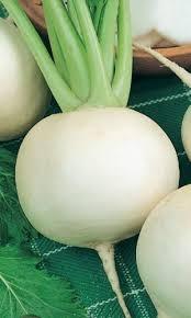 Дайкон САША Ультраскороспелый сорт: от всходов до уборки 35 45 дней. Корнеплод округлый или округло-овальный, массой 200-400 г, наполовину погружен в почву, хорошо выдергивается.Мякоть белая,