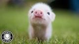 Super Cute Animals