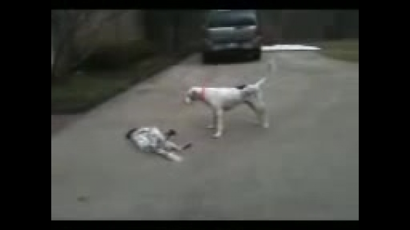 Puppy fakes her own death while playing