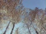 Гелена Великанова Опавшие листья