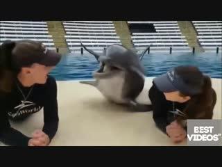 Дельфин ловелас