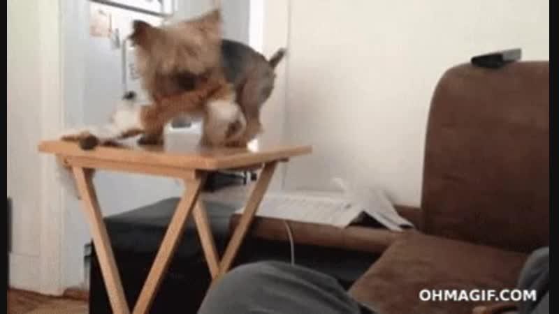 щенок упал со стула