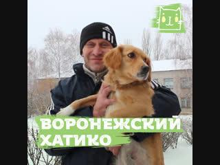 Собака ежедневно дежурит у больницы и ждет хозяина