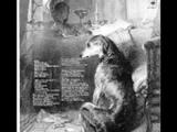 Pavlov's Dog -