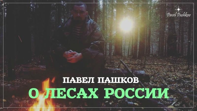 Павел Пашков: о лесах России   Важное обращение к общественности