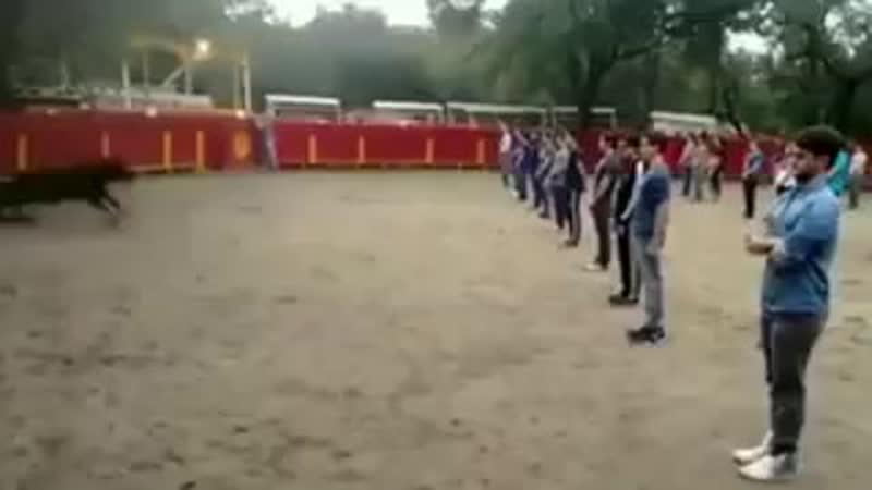 Учитель показывает, что бык в квадрате, полном людей, не атакует никого, если они ему не угрожают