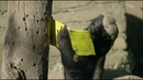 Honey Badger vs. Bee Hive Nature on PBS