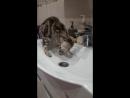 кошка умывается сТеФаНиЯ