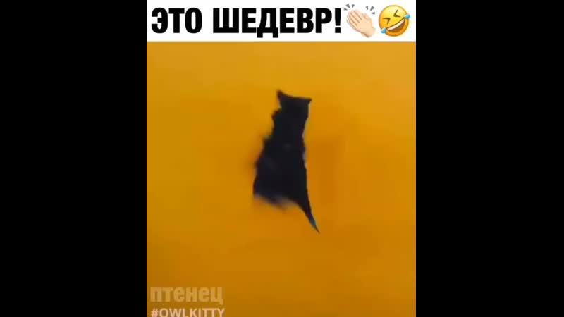 Котики сделают любой клип круче плохая киса
