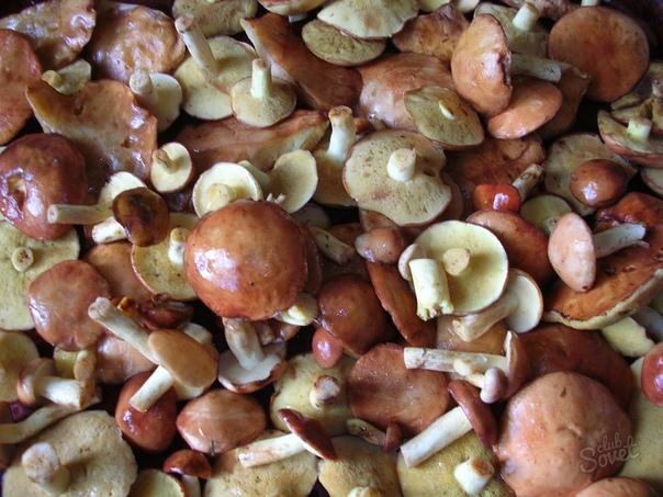 Как правильно и быстро почистить маслята У масленка шляпка покрыта маслянистой пленкой, предохраняющая плод от высыхания. К липкой поверхности прилипает весь лесной мусор хвоя, листва, песок,