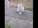 Безумный странный кот пришёл к кошке в гости